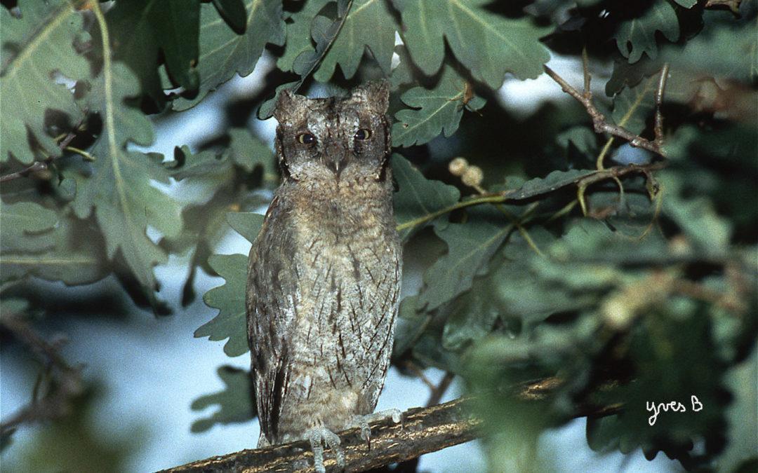 Journal de Biodiversité en Biovallée