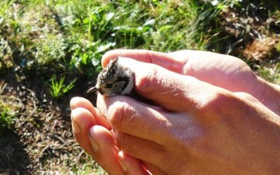 Journal de la Biodiversité – Recensement des oiseaux communs –  Gilbert David LPO